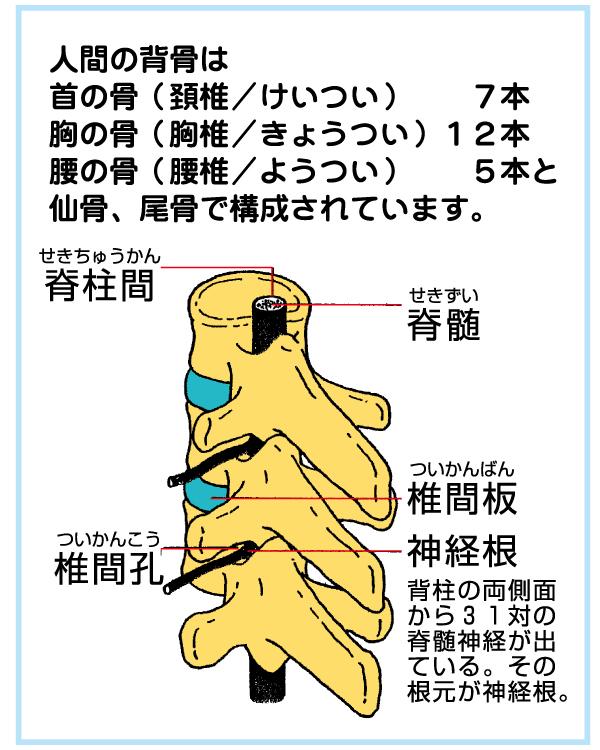 人間の背骨について01
